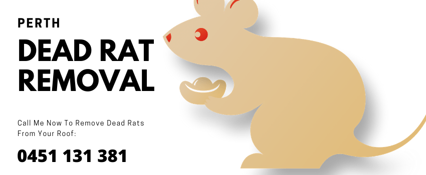 Dead Rat Removal Service Perth