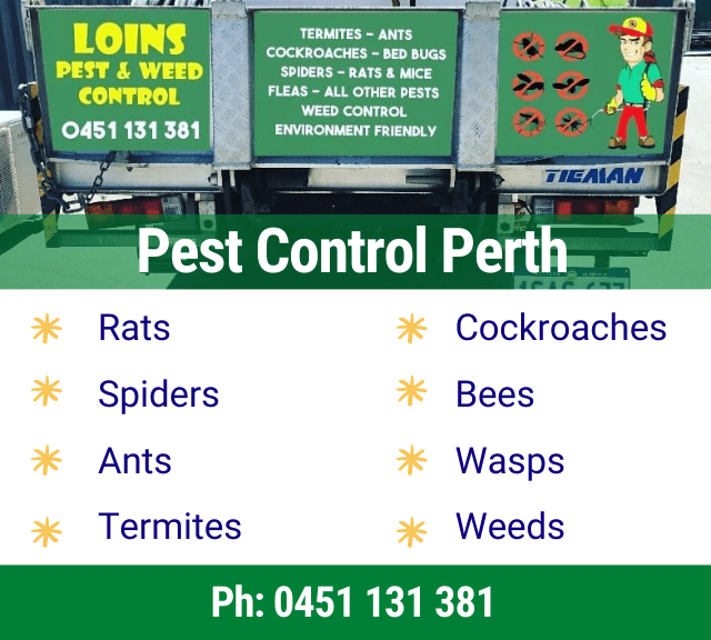 Pest Control {SUBRUBS}